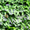 인공적인 옥외 작은 정원 철회 가능한 담