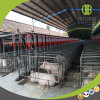 현대 농장에 있는 완료 돼지를 위한 사슬 디스크 공급 시스템