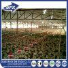 Сарай птицефермы цыпленка обеспечения торговлей хорошего качества