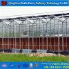 トマトのきゅうりInvernaderoのための低価格の温室のベンチ