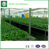 Intelligent Po/PE Film Greenhouse for Planting clouded