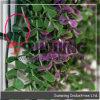 Nuevo Products Removable jardín Fencing Ideas de 2015 para Home Garden