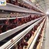 Jaula automática de la capa del pollo para la venta en Filipinas