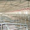 Сарай свиньи стальной структуры высокого качества и Breeding оборудование