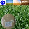 Traccia Element Amino Acid Chelate per Spraying Fertilizer