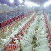 يشبع مجموعة [بوولتري فرم قويبمنت] لأنّ دجاجة إنتاج