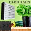 가득 차있는 스펙트럼 고성능 이중 칩 5W 수경법 LED는 온실 식물을%s 가볍게 증가한다 경작 세륨 RoHS 전구 온실 Parlight LED가 빛을 증가하는