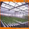 이동할 수 있는 Seedbed를 가진 유리제 다중 경간 온실
