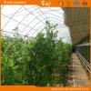 딸기 증가를 위한 높은 비용 성과 태양 온실