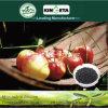 Il carbonio di resistenza di malattia di Kingeta ha basato il fertilizzante organico biologico