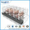 Ferme porcine Cages d'équipement/cochon/galvanisation à chaud de la gestation crate