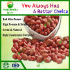 Nocciolo rosso dell'arachide del raccolto 28/32 all'ingrosso della Cina nuovo con il prezzo poco costoso