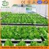 Sistemas Growing hidropónicos del invernadero comercial para la lechuga