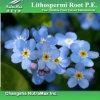 Extrait naturel de racine de 100% Lithospermi (30% Shikonin)