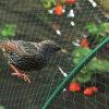 農業の反鳥の保護ネット
