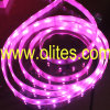 (CE&RoHS) luz de la cuerda de 12V/24V 3528 SMD LED, cuerda del neón del LED