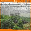 Type durable Chambre verte en verre de Venlo de Multi-Envergure
