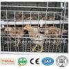 Молодая клетка цыпленока на поднимать 1-14 цыпленоков недели