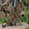 ヒョウの動物園の網中国製