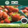 Kingeta migliora il fertilizzante organico biologico basato carbonio della microflora del terreno