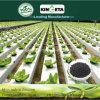 Kingeta migliora il concime organico NPK 8-6-18 del fertilizzante composto di Biohar della microflora del terreno