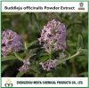 Природные Buddleja Officinalis порошок извлечения HPLC Acacetin 2%
