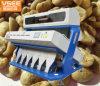 光学コーヒー豆カラー選別機は不適当な豆を除去する