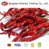 Padrão de exportação Nova cultura desidratado de pimenta vermelha