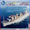 싱가포르 Door to Door Service Sea Freight Shipping에 중국