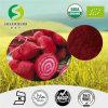 高品質の甜菜Powder/100%の自然な甜菜のルート粉か高品質のビートのルート粉または工場赤カブのルート粉または高品質の赤カブのルート粉