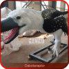 Fornecedor Lifesize do modelo do dinossauro do dinossauro