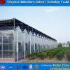 Niedriger Preis Hidroponica landwirtschaftliches Glasgewächshaus