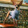 بالجملة باردة جديد تصميم محبوب منتوج كلب كنزة يلبّي كلب نمو محبوب قطع كنزة