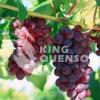 Chlormequat van de Regelgever van de Groei van de Installatie van Quenson van de koning 98% Tc Chlormequat 80% SP