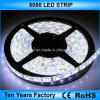 Migliore striscia flessibile 5050 dell'indicatore luminoso di prezzi 12V LED