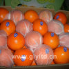 Nova laranja de umbigo de primeira categoria
