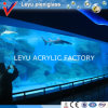 Sheet desobstruído para Acrylic Fish Aquarium Tank