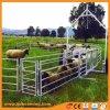 Горячий DIP оцинкованный овец в сельских районах во дворе ограждения