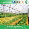 Дом земледелия пластичная зеленая для овощей/цветков