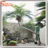Árvore artificial ao ar livre da planta da palma de coco do fabricante de China