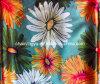 Cetim impresso da flor do estiramento