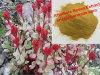Чисто естественная выдержка Rosavin Salidroside Rhodiola Rosea