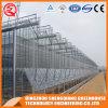 Китай Венло сельского хозяйства Multi Span стекло гидропоники выбросов парниковых газов для овощей и цветов/томатный/Ферма/сад
