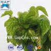100%の自然なクワの葉のプラントエキス