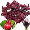 Roselle Hibiscus Extract Powder