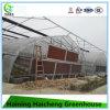 Casas verdes plásticas do jardim comercial da agricultura com sistema refrigerando