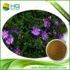 Polvere viola della margherita dell'estratto di Purpurea del Echinacea