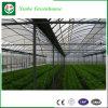 L'isolamento/sceglie/doppia serra di PE/Po/Intelligent/Film per le verdure/frutto/pianta/azienda agricola/Aquacultu/ortaggi/fiori/azienda agricola/giardino /Agriculture