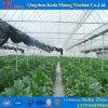 Estufa comercial do baixo custo para o tomate/pepino/morango