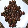赤く自然な小石の石のタイル